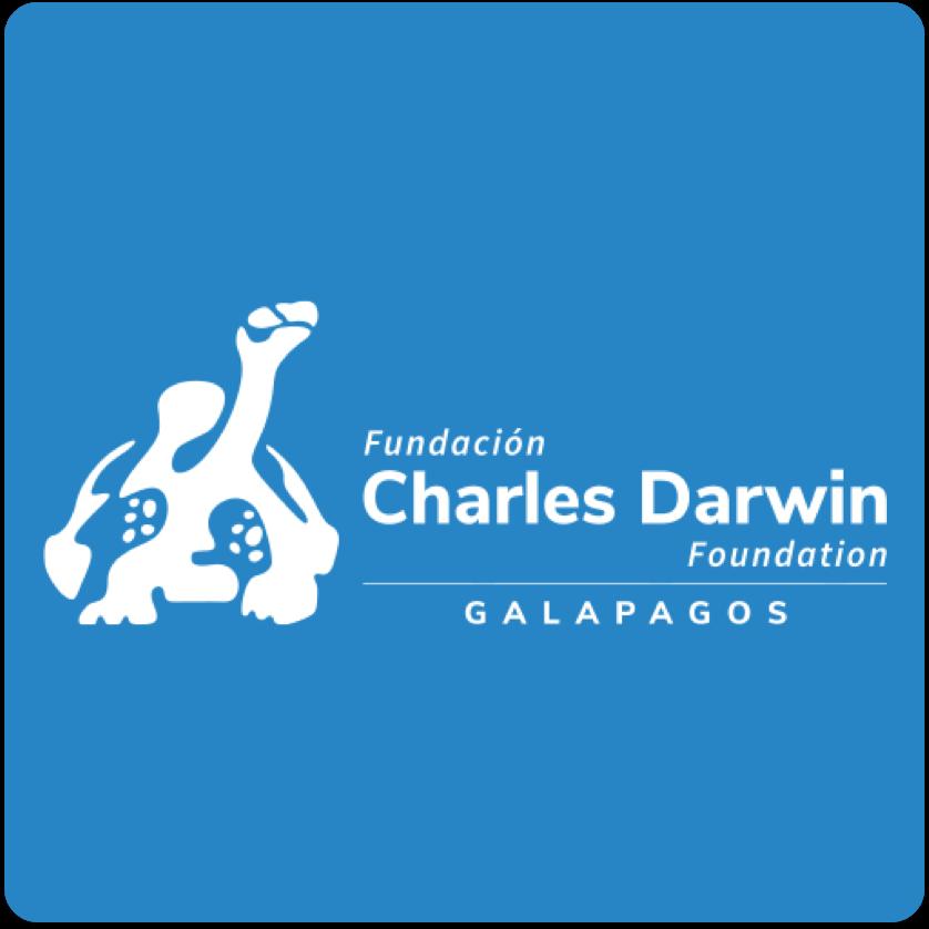 cd-foundation