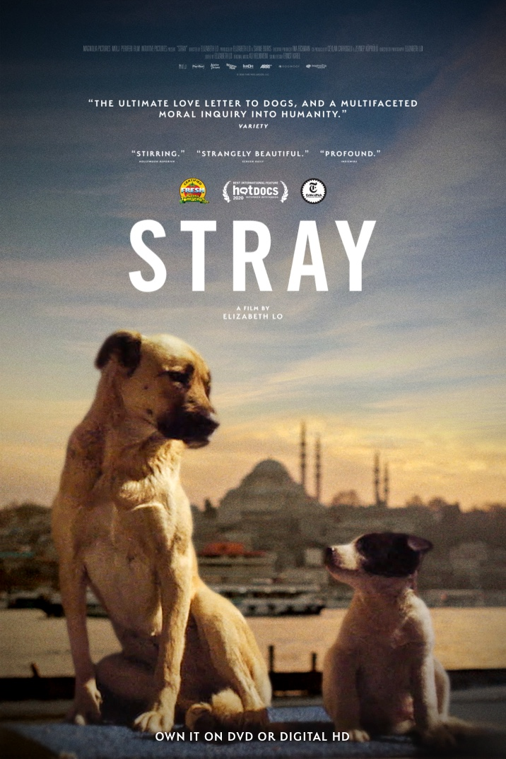 Poster image for Stray