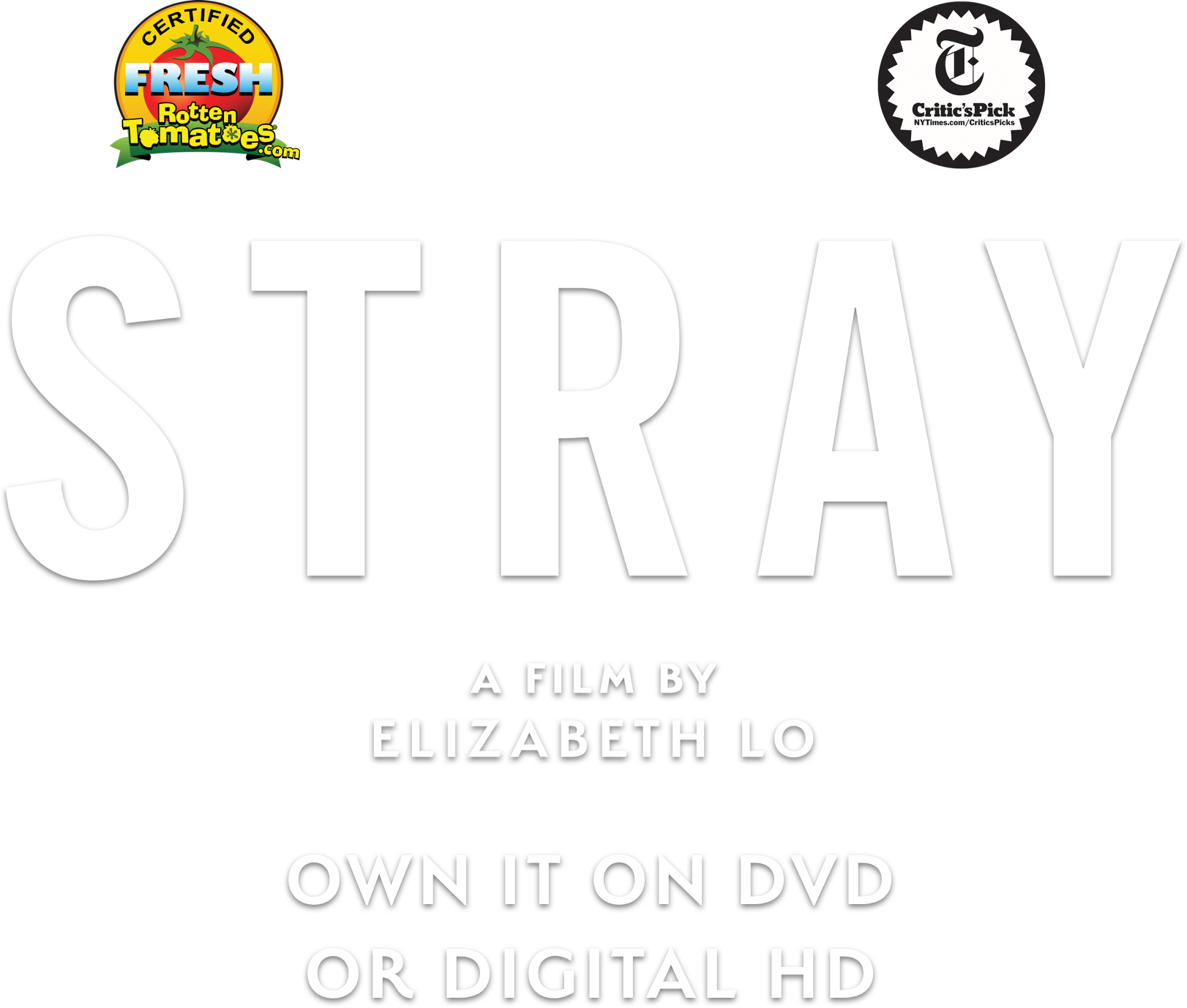 Stray | Official Movie Website | A Magnolia Pictures Film | Directed by Elizabeth Jo | Synopsis