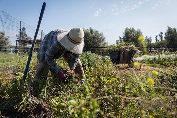 Biggest Little Farm: About the Farm | NEON