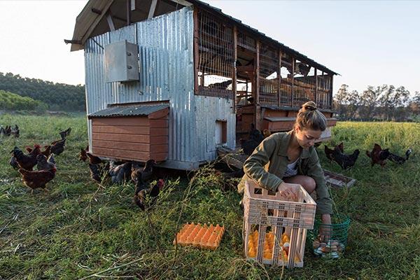 Biggest Little Farm: Get Tickets | NEON