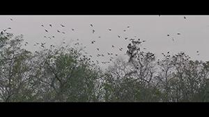 American Crime - Video