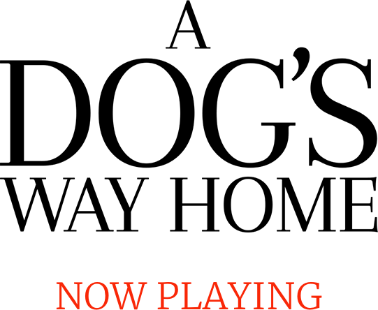 A Dog's Way Home Movie Synopsis | Official Website | Sony Pictures