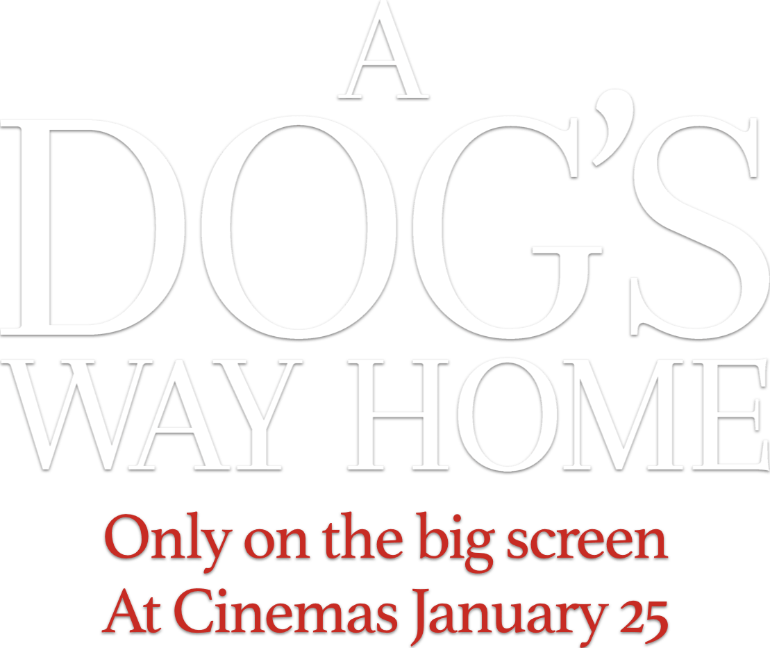 A Dog's Way Home : %$SYNOPSIS% | Sony Pictures