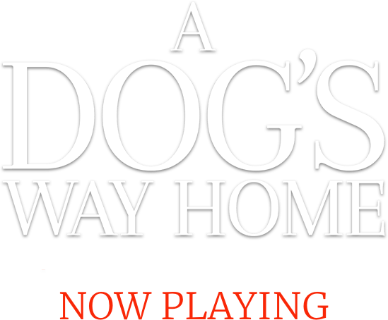 A Dog's Way Home Movie | Official Website | Sony Pictures